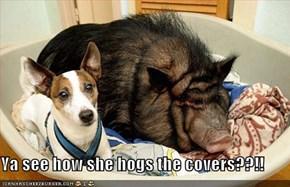 Ya see how she hogs the covers??!!