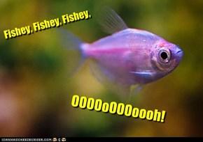 Fishey, Fishey, Fishey,
