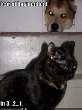 fear of basment cat  in 3...2...1.