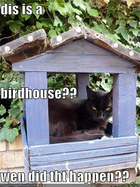 dis is a  birdhouse?? wen did tht happen??