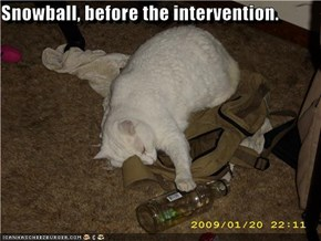Snowball, before the intervention.