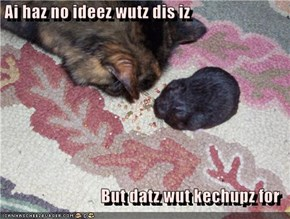 Ai haz no ideez wutz dis iz  But datz wut kechupz for