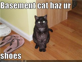 Basement cat haz ur   shoes