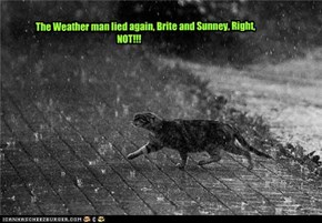 The weather man lied, again!! Brite and Sunney? NOT!!!