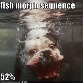 Fish Morph Sequence  52%