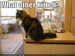 What other kitteh?