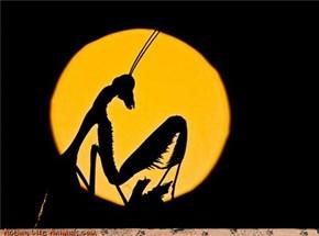 Silhouette Mantis