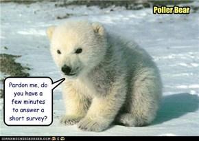 Poller Bear