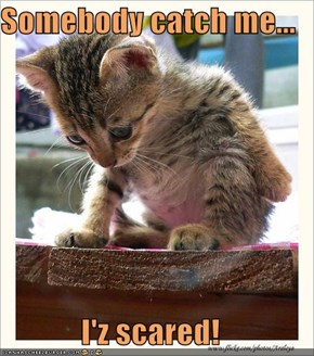 Somebody catch me...  I'z scared!