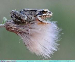 Fluff Loving Frog