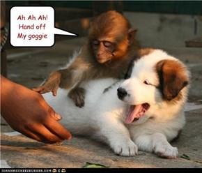 Posessive monkey
