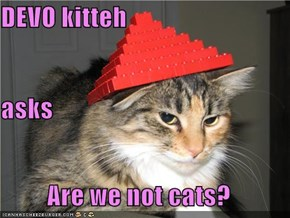 DEVO kitteh  asks Are we not cats?