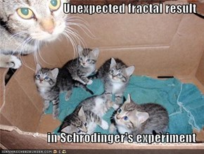 Unexpected fractal result  in Schrodinger's experiment