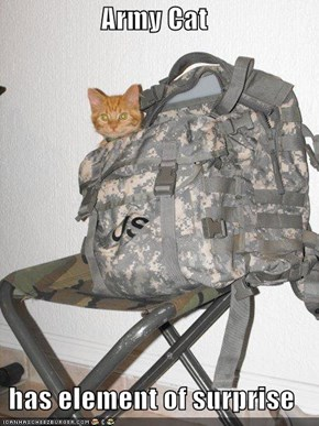 Army Cat  has element of surprise