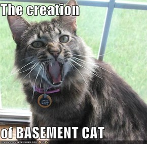 The creation  of BASEMENT CAT