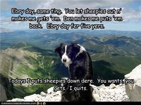 Ebry day, same ting.  You let sheepies out n'  makes me gets 'em.  Den makes me puts 'em back.   Ebry day fer five yers.