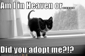 Am I in Heaven or.......  Did you adopt me?!?