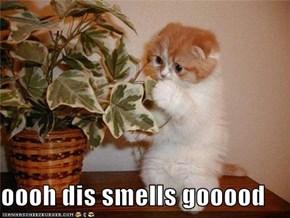 oooh dis smells gooood