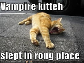 Vampire kitteh  slept in rong place