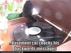 Basement cat checks his backwards messages