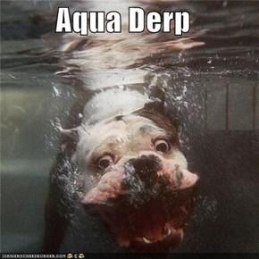 Aqua Derp
