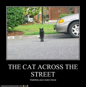 THE CAT ACROSS THE STREET