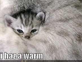i haz a warm