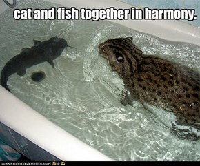 cat and fish together in harmony.