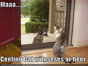 Maaa....  Ceeling Cat witnseses ar heer