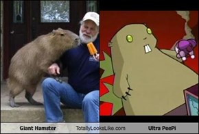 Giant Hamster Totally Looks Like Ultra PeePi
