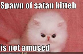 Spawn of satan kitteh  is not amused
