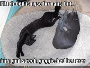 Kitteh-bed is nyse for naps, but . . .  fur a gud strech, goggie-bed betterer