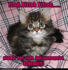 Itteh Bitteh Kitteh.......