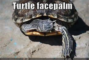 Turtle facepalm