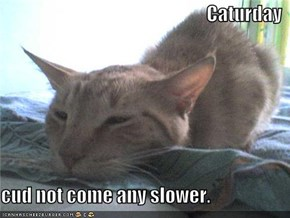 Caturday  cud not come any slower.
