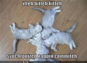 itteh bitteh kitteh  synchronized nappin commiteh