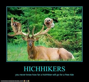 HICHHIKERS