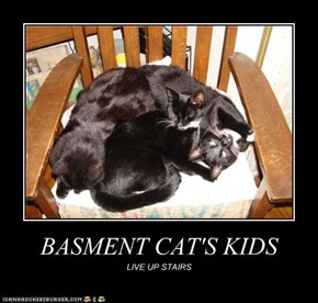 BASMENT CAT'S KIDS