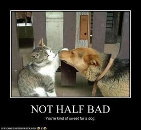 NOT HALF BAD