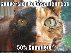 Conversion to basement cat:  50% Complete
