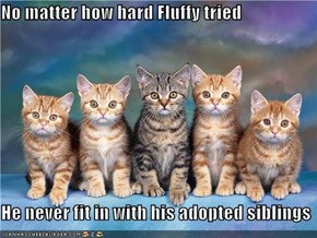 No matter how hard Fluffy tried  He never fit in with his adopted siblings