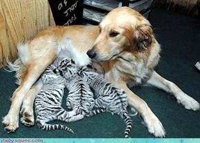 Dog, Wrong Babies!