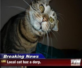 Breaking News - Local cat haz a derp.
