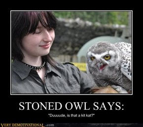 STONED OWL SAYS: