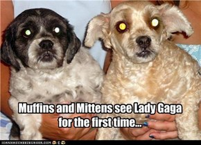 Muffins and Mittens see Lady Gaga for the first time...