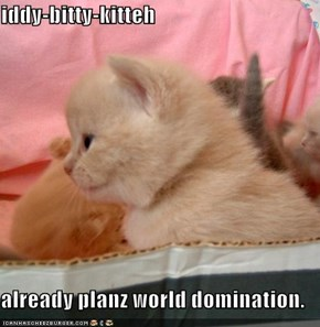 iddy-bitty-kitteh  already planz world domination.