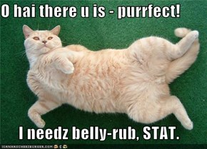 O hai there u is - purrfect!  I needz belly-rub, STAT.