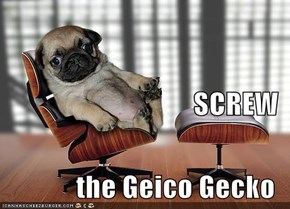 SCREW the Geico Gecko