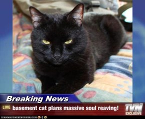 Breaking News - basement cat plans massive soul reaving!
