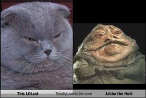 This LOLcat Totally Looks Like Jabba the Hutt